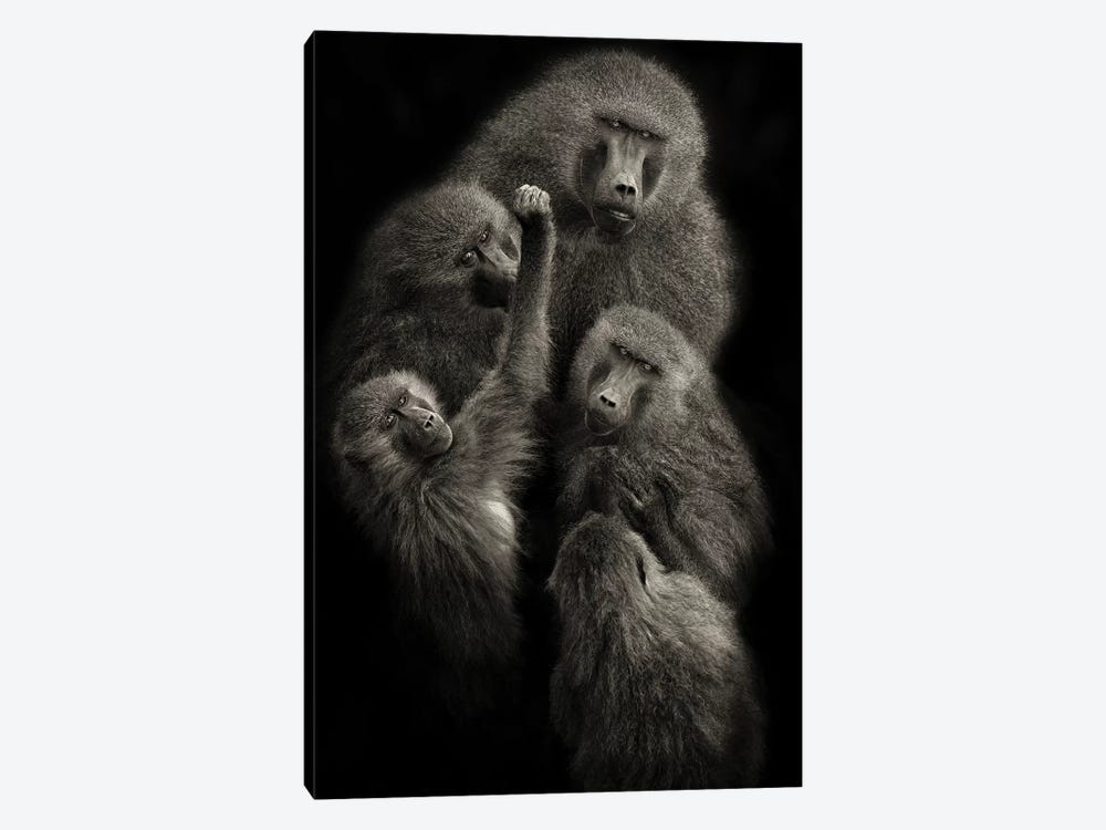 "Baboons ""United"" by Mario Moreno 1-piece Art Print"