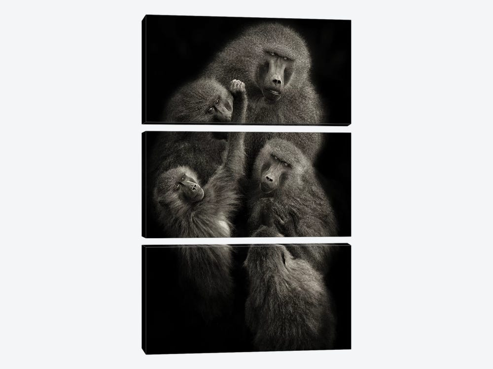 "Baboons ""United"" by Mario Moreno 3-piece Canvas Art Print"
