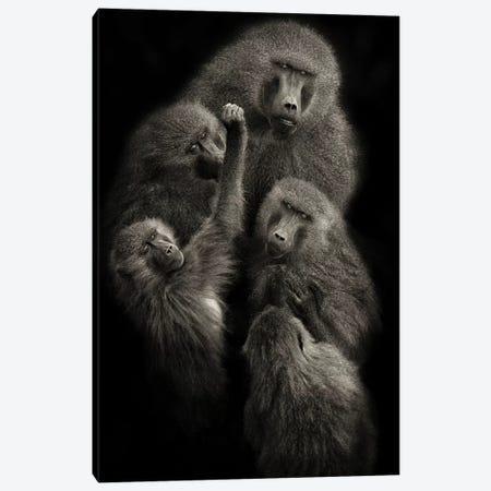 "Baboons ""United"" Canvas Print #OXM3790} by Mario Moreno Art Print"