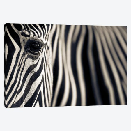 Eye & Stripes Canvas Print #OXM3791} by Mario Moreno Canvas Art Print