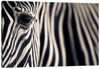 Eye & Stripes Canvas Art Print