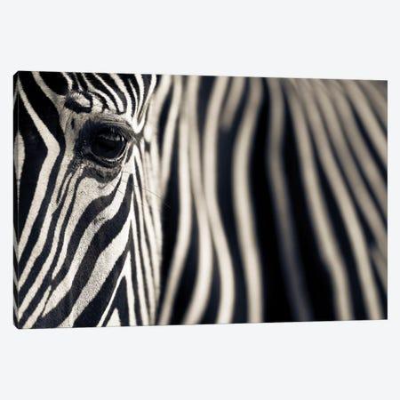 Eye & Stripes Canvas Print #OXM3791} by Mario Moreno Canvas Art Print