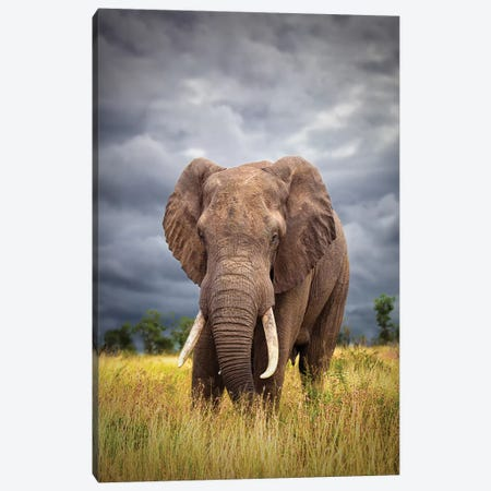 The Big Bull Canvas Print #OXM3793} by Mario Moreno Canvas Art Print