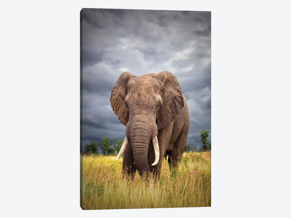 The Big Bull 1-piece Canvas Wall Art
