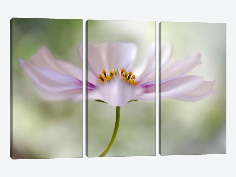 Cosmos II by Mandy Disher 3-piece Canvas Print