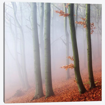 Beeches Canvas Print #OXM3810} by Martin Rak Canvas Artwork