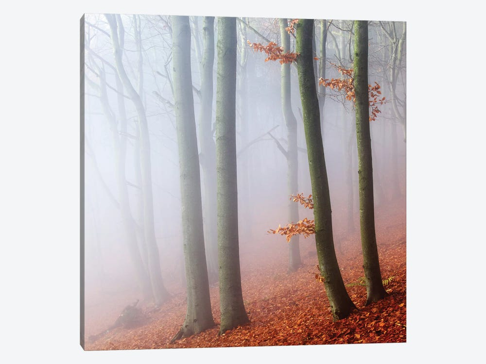 Beeches 1-piece Canvas Print