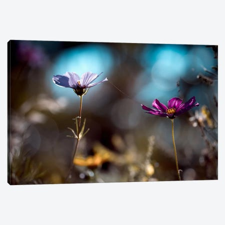 Le Lien Canvas Print #OXM384} by Fabien Bravin Canvas Art