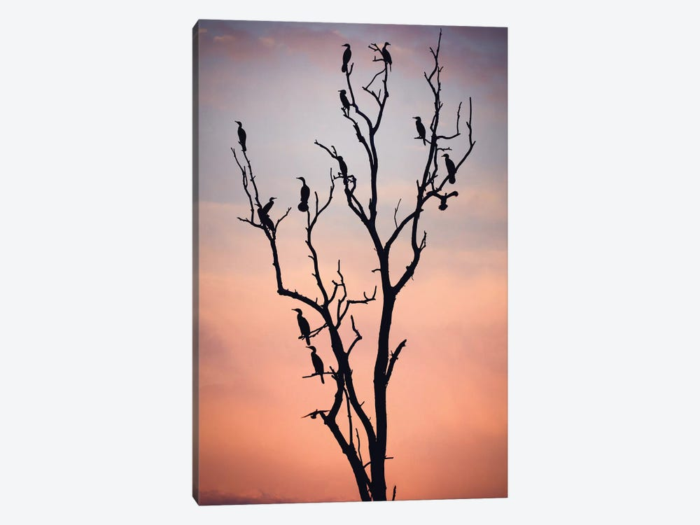 Before The Sunset by Niklas Rosenkilde 1-piece Canvas Art Print