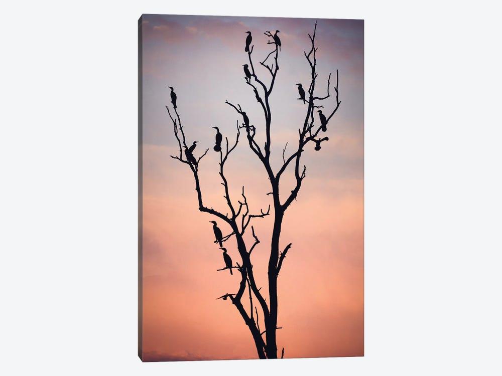 Before The Sunset by Niklas Rosenkilde 1-piece Canvas Art Print