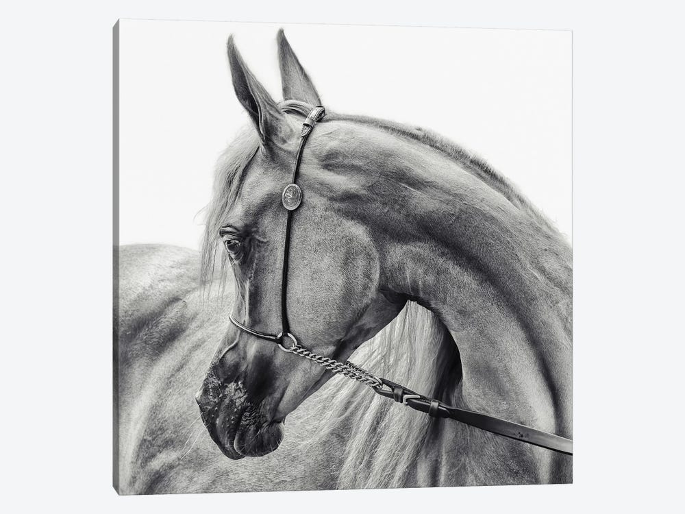 The Arabian Horse by Piet Flour 1-piece Canvas Art
