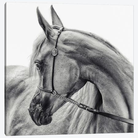 The Arabian Horse Canvas Print #OXM3945} by Piet Flour Art Print