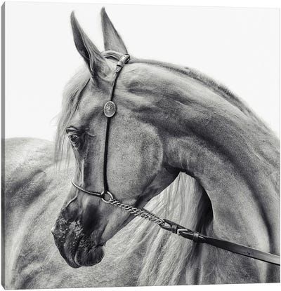 The Arabian Horse Canvas Art Print