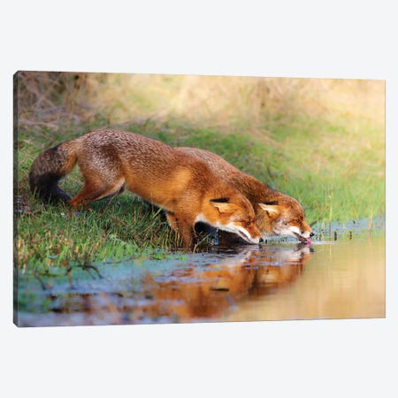 Thirsty Canvas Print #OXM3954} by Pim Leijen Canvas Wall Art