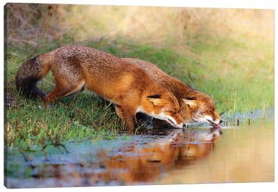 Thirsty Canvas Art Print