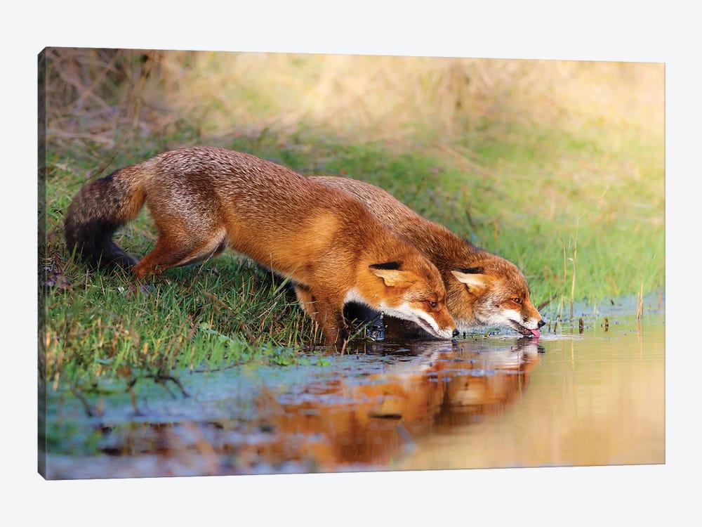 Thirsty by Pim Leijen 1-piece Canvas Art