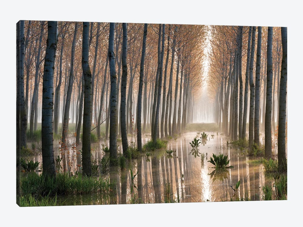 Rains Of Spring by Raffaele Spettoli 1-piece Canvas Wall Art