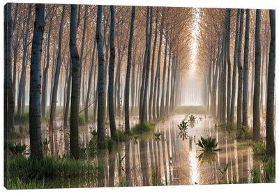 Rains Of Spring Canvas Art Print