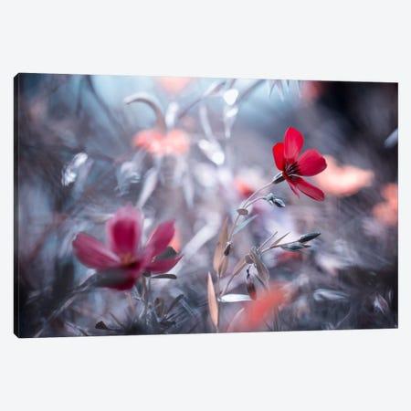 Une Fleur, Une Histoire Canvas Print #OXM397} by Fabien Bravin Art Print