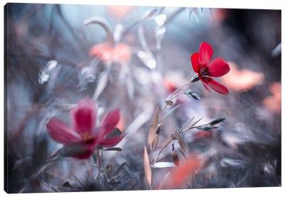 Une Fleur, Une Histoire Canvas Art Print