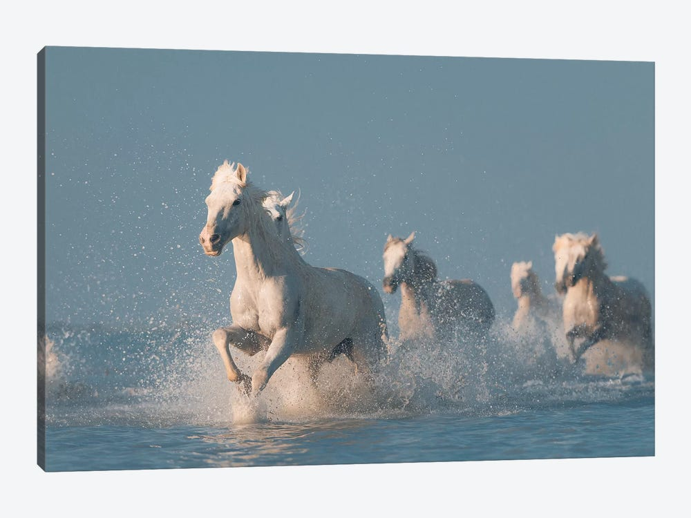 Angels Of Camargue I by Rostovskiy Anton 1-piece Canvas Art