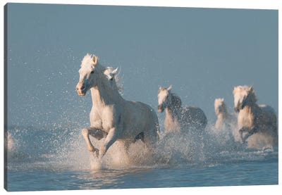 Angels Of Camargue I Canvas Art Print