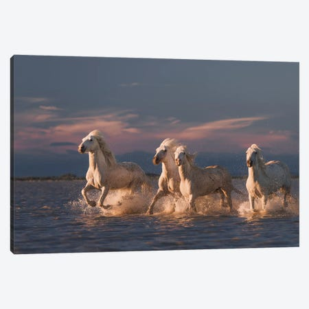 Angels Of Camargue II Canvas Print #OXM3995} by Rostovskiy Anton Canvas Wall Art