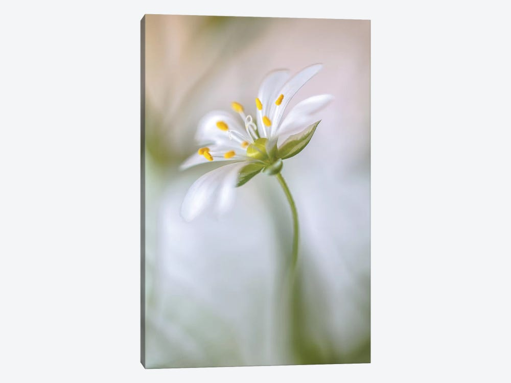 Stitchwort Soft by Mandy Disher 1-piece Canvas Artwork