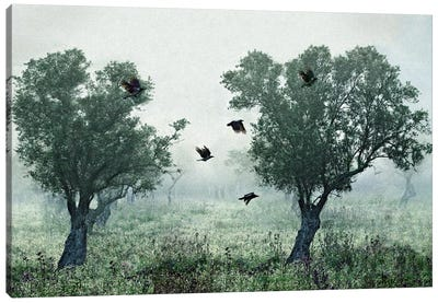 Crows In The Mist Canvas Art Print