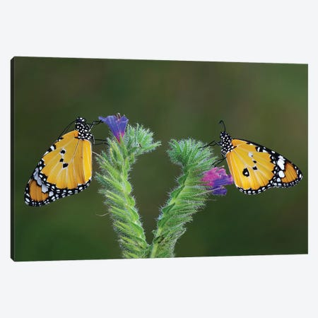 Friendship Canvas Print #OXM4014} by Savas Sener Canvas Art