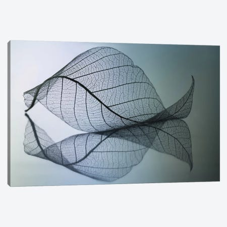 Curvaceousness Canvas Print #OXM4035} by Shihya Kowatari Canvas Art