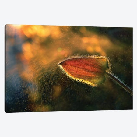 Sunshine Through The Rain Canvas Print #OXM4076} by Tomer Yaffe Canvas Artwork