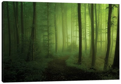 Spring Promise Canvas Print #OXM40
