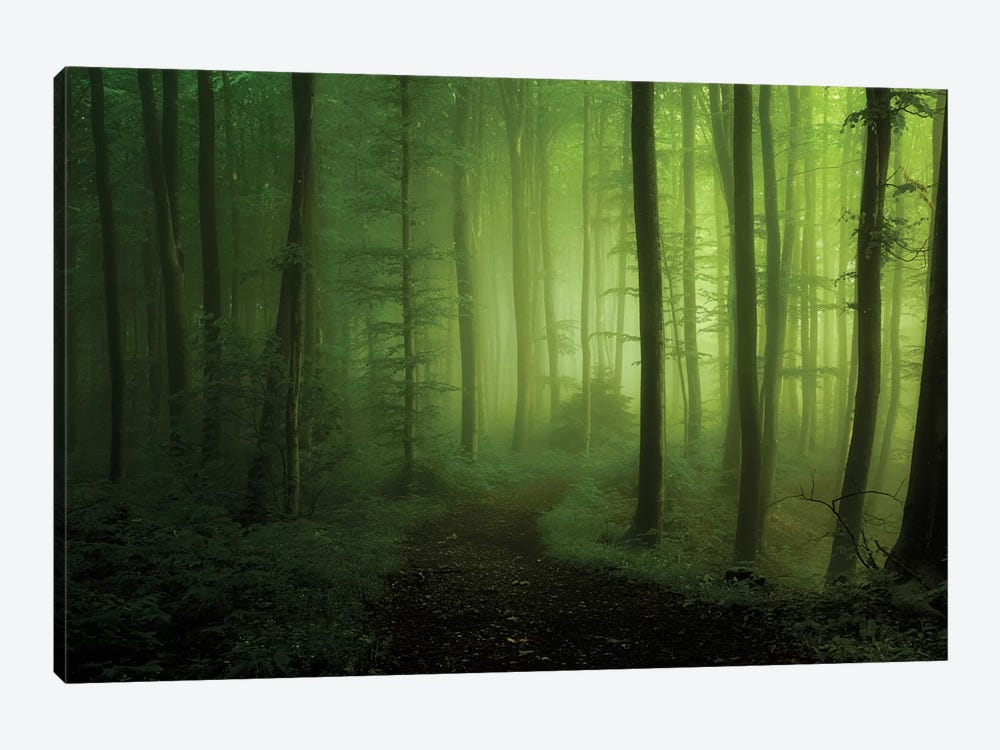 Spring Promise by Norbert Maier 1-piece Canvas Wall Art
