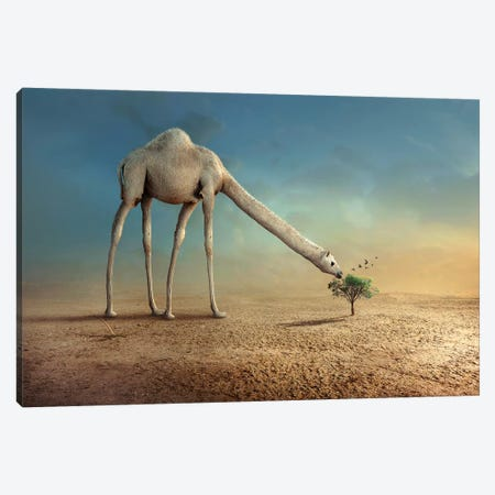 Camel And Tree Canvas Print #OXM4147} by Sulaiman Almawash Canvas Art