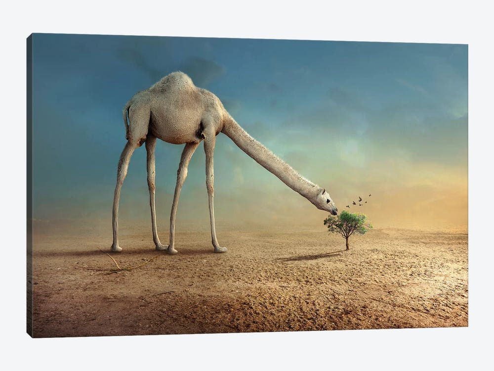 Camel And Tree by Sulaiman Almawash 1-piece Canvas Art Print