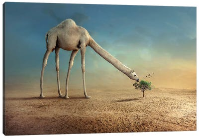 Camel And Tree Canvas Art Print