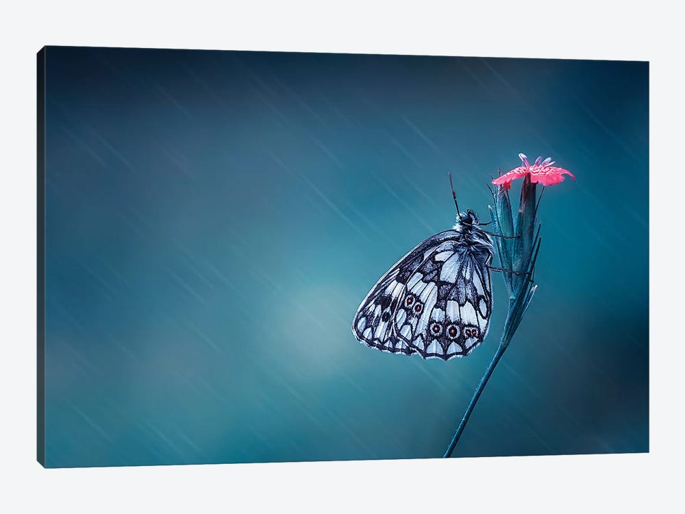 Butterfly I by Bess Hamiti 1-piece Canvas Artwork