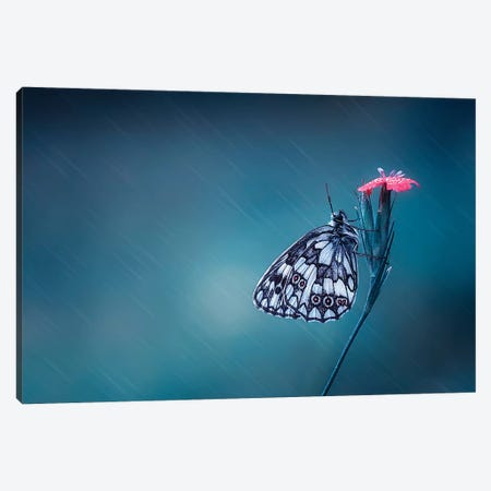 Butterfly I Canvas Print #OXM4166} by Bess Hamiti Canvas Art