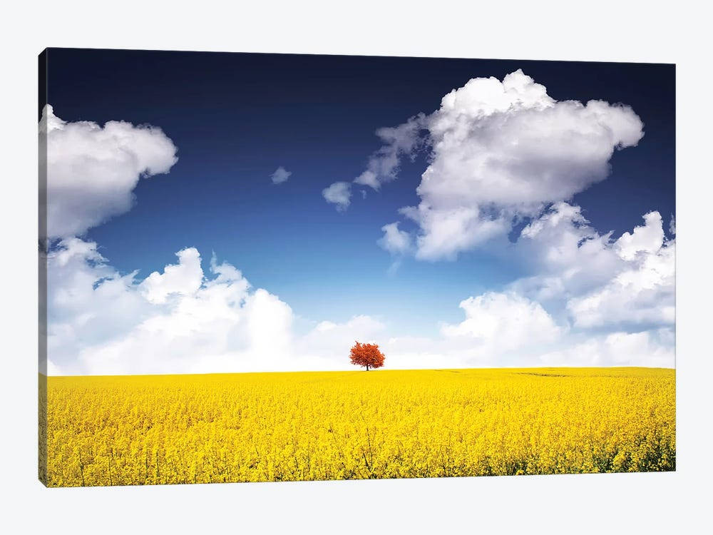 Canola Meadow by Bess Hamiti 1-piece Canvas Print