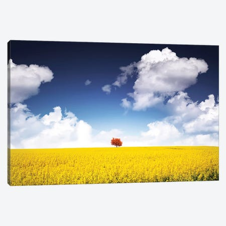 Canola Meadow Canvas Print #OXM4167} by Bess Hamiti Canvas Artwork