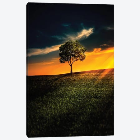 Lone Tree Canvas Print #OXM4170} by Bess Hamiti Canvas Art