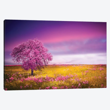 Pink Tree Canvas Print #OXM4175} by Bess Hamiti Canvas Print