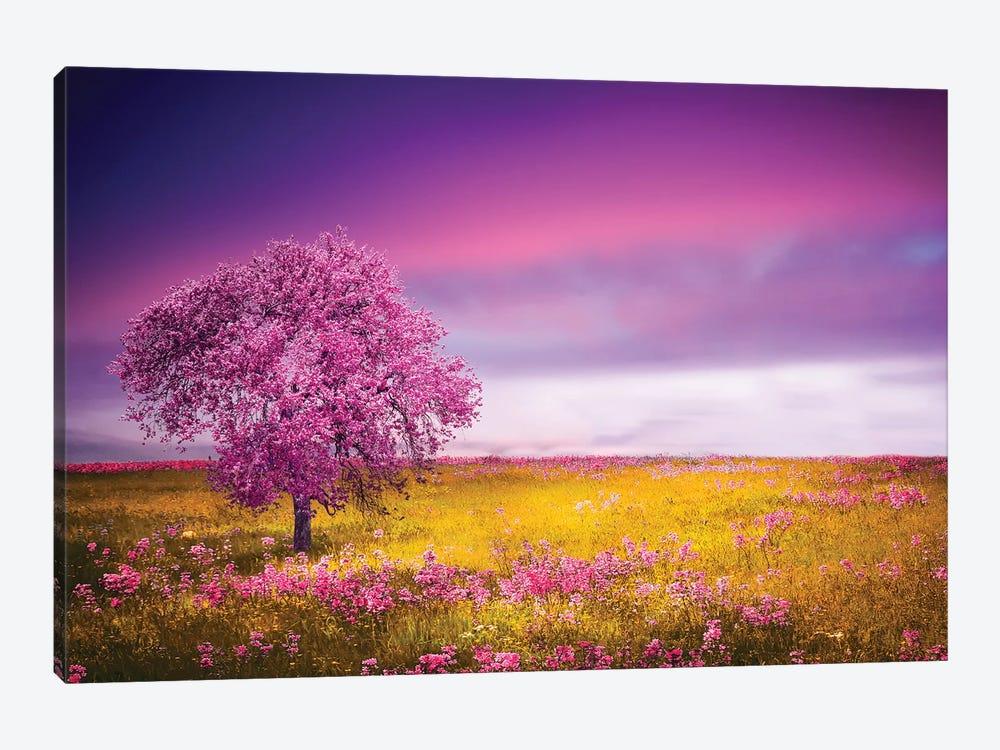 Pink Tree by Bess Hamiti 1-piece Canvas Art