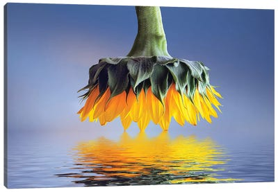 Sun Flower Canvas Art Print