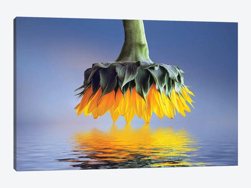 Sun Flower by Bess Hamiti 1-piece Canvas Artwork