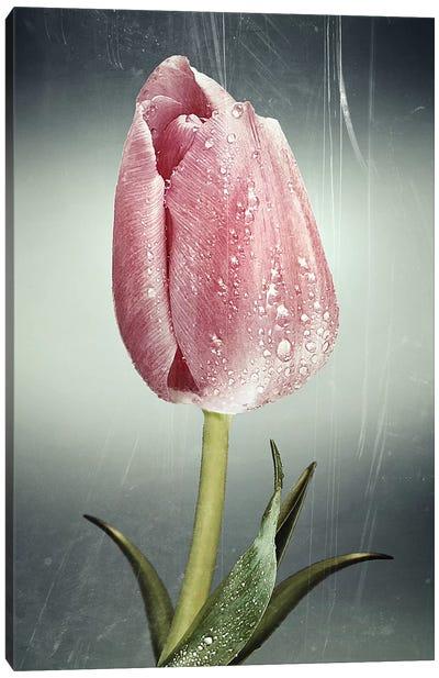 Tulipan Canvas Art Print