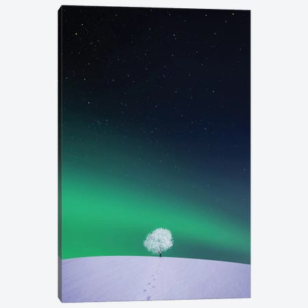 Apple II Canvas Print #OXM4192} by Bess Hamiti Canvas Artwork