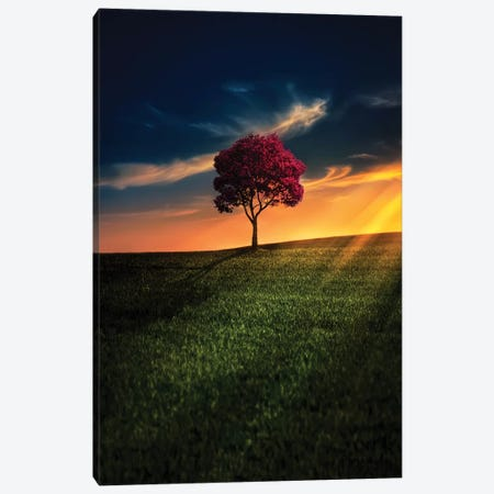 Awesome Solitude Canvas Print #OXM4193} by Bess Hamiti Canvas Wall Art