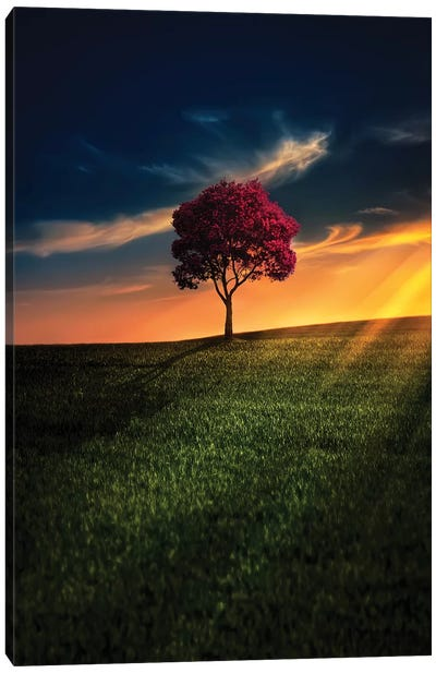 Awesome Solitude Canvas Art Print
